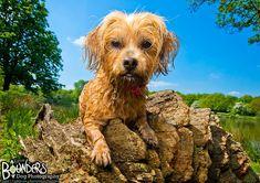 Shih Tzu, Yorkie, Photo Sessions, Funny Dogs, Dip, Portraits, Amazing, Animals, Yorkies