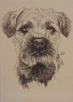Barbara Keith 'Border Terrier' Canvas Art in. W x 32 in. Dog Portraits, Portrait Art, Best Dog Breeds, Best Dogs, Graphite Drawings, Charcoal Drawings, Brown Dog, Animal Drawings, Pencil Drawings