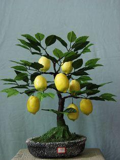 Lemon Bonsai