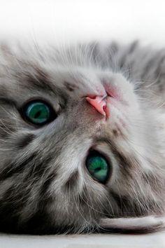 Those pretty eyes! :)