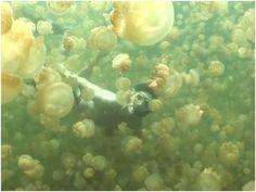 mergulhando sem medo das águas-vivas