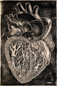 Arte anatómico del corazón por Olesya Drashkaba
