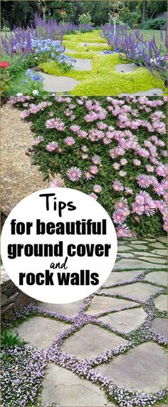 Tips for Beautiful Ground Cover and Rocks Walls. Suggestions on what to plant this season in your flower beds for beautiful coverage. Tips on planting and caring for your ground cover. Directions on the proper way to plant ground cover.