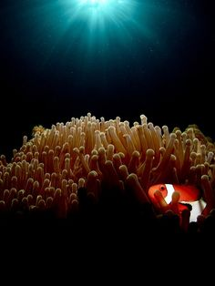 """The Lonely Clown"" ~ Photography by bomancao 