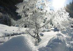 Baum in Schneekristallen gehüllt   © TV Schladming #schladming #untertal #wildewasser Der Bus, Wilde, Snow, Outdoor, Walking Paths, Tourism, Road Trip Destinations, Outdoors, Outdoor Games