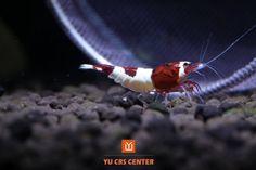 1000+ images about Aquarium Dreams on Pinterest Aquascaping ...