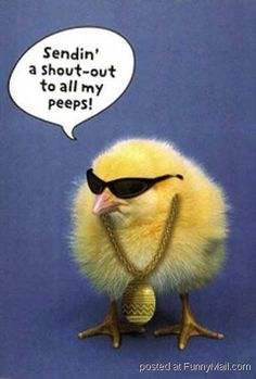 check out this picture and have a great laugh! Cool Easter Chick online Easter Comic is very funny, Sendin' a shout-out to all my peeps! the cool comic Easter Chick Says. Purchase funny movies and videos, comedy, o Funny Easter Jokes, Funny Easter Pictures, Easter Cartoons, Corny Jokes, Stupid Jokes, Funny Animals, Cute Animals, Animal Funnies, Animal Memes