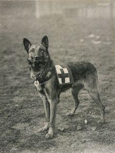 Le migliori 90+ immagini su cani di soccorso | cani, cane