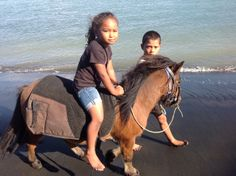 www.horse.co.nz