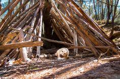 Les ocres de Mormoiron avec son chien - The Adventure Dogs