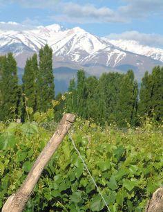 Bodega #Rosell #Boher (Chacras de Coria, #Mendoza)