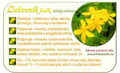 Info obrazok lubovník bodkovany Korn, Organic Beauty, Life Is Good, Detox, Medicine, Herbs, Vegetables, Health, Salud