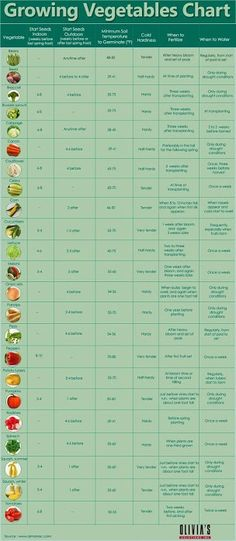 Complete Guide to Vegetable Gardening