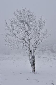 #tanakaakira #tasogare #snow #winter #tree