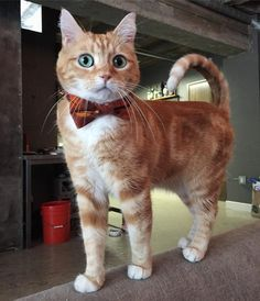 Cute and stylish cat                                                                                                                                                                                 More