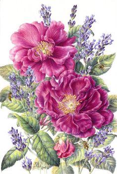дикая роза - Схемы вышивки - lenaknigolub - Авторы - Портал «Вышивка крестом»