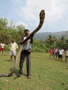 Cobras super legais