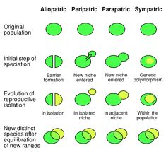 Types of Speciation - Evolution Definitions Ap Biology, Science Biology, Science Lessons, Science Activities, Life Science, Science And Nature, Molecular Biology, Process Of Evolution, Science Penguin