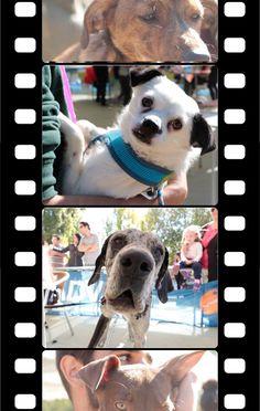 Los perros más guapos de Zamora se dan cita en La Aldehuela. Un concurso de mascotas reúne en la Aldehuela a medio centenar de perros premiados por su belleza, simpatía, ternura, educación y afinidad con el dueño