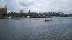 Tampa Florida Dragon boat races.  August 2011.