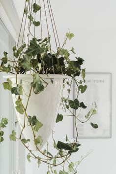 Kun katson ympärilleni - Lisbet e. Plant Hanger, My House, Pergola, Green, Plants, Home Decor, Home, Decoration Home, Room Decor
