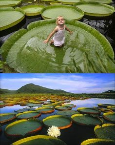 Bucket list sit in a giant lily pad on the amazon River. It's terrifying yet exciting all at the same time! Golf Courses, Camera, Creative, World, Sports, The World, Hs Sports, Excercise, Cameras