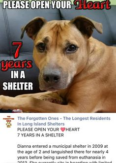 12/17/16 DIANNA - 7 YEARS IN SHELTER! PLEASE MAKE HER WISH COME THRU!! /ij https://m.facebook.com/580937175394787/photos/a.580969008724937.1073741828.580937175394787/716009348554235/?type=3&source=54