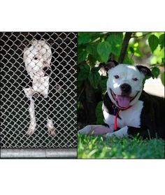 Before and After Photos of Shelter Dogs - Dogs Tips & Advice | mom.me