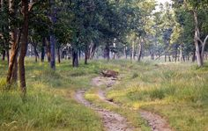 A romantic getaway or a complete wilderness holiday - United-21 #Pench has it all