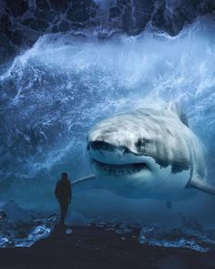 Giant Animals And Tiny Humans Impressive Photos Manipulations Surreal Art We bring to you On Magazine Website a beautiful and Impressive Shark Pictures, Shark Photos, Animal Pictures, Giant Animals, Big Animals, Scary Ocean, Photo Animaliere, Shark Art, Surreal Photos