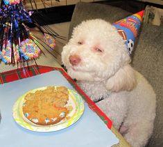 Dog B-Day.