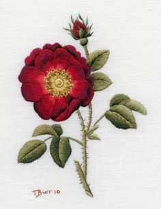 Needle Painting with Thread-French Rose by Trish Burr Embroidery Needles, Silk Ribbon Embroidery, Crewel Embroidery, Cross Stitch Embroidery, Embroidery Patterns, Machine Embroidery, Bordados E Cia, Thread Painting, Embroidered Flowers