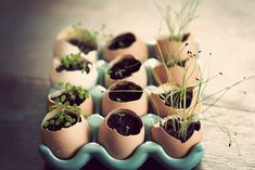 Egg shells are great containers in which to start seedlings for your garden. Start collecting egg shells by cracking the eggs near the top in order to keep the bottom half whole...Sue 2013