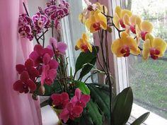 pestovanie orchidei Garden Landscaping, Indoor Plants, Glass Vase, Gardening, Landscape, Fruit, Terrarium, Therapy, Plant