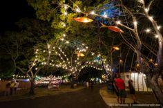 Tree Fish decorating Civic Square for the Darwin Festival, Darwin, NT, Australia