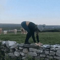 Cows discover the wonders of yoga