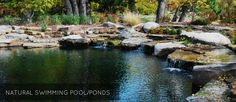 TOTAL HABITAT - Natural Swimming Pools & Ponds - Design & Fabrication Services - Zoo Exhibits & Visitor Experiences