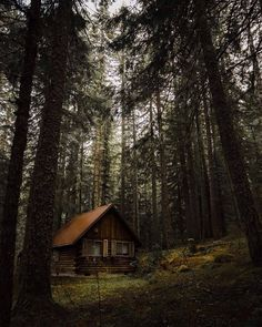 Cabin in the woods Cabin In The Woods, Cottage In The Woods, Into The Woods, Forest Cabin, Forest House, Forest Cottage, Log Cabin Homes, Log Cabins, Little Cabin