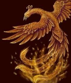 Rising of the Phoenix #usq #phoenix