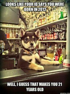 New meme: Bartender Puppy