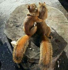 squirrel buddies