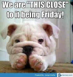 """55 """"Almost Friday"""" Memes - """"We are 'THIS CLOSE' to it being Friday!"""" Funny Animal Pictures, Dog Pictures, Cute Pictures, Funny Animals, Cute Animals, Animal Funnies, Animal Pics, Cute Puppies, Cute Dogs"""