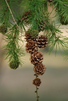 Cabin in the Woods Decorations Christmas, Walk In The Woods, Seed Pods, Pine Tree, Pine Cones, Evergreen, Mother Nature, Enchanted, Woodland