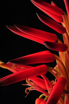 Simply beautiful Aloe Sketches by bill gracey