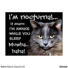Badass Cats Postcard