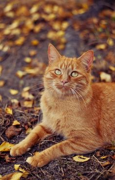 .beautiful ginger