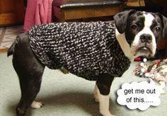 Dog knitted sweater; free pattern