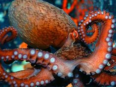 I got: Octopus! Which Ocean Animal Are You?