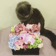 My CEO QC-ing my Maison Des Roses work before it was delivered yesterday. Because his final say-so is so important. We all have roles to play in this life. And his is being a pain in my ass. #catexecutiveofficer #Mischka #maisondesroses #thefelinedesigner #RussianBlue #cat #furrymonster #thefloraldesigner