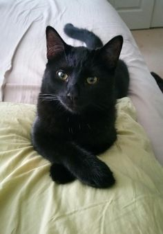 So I rescued a panther... - Imgur